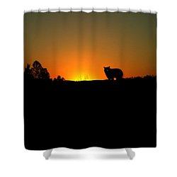 Black Bear Sunset Shower Curtain