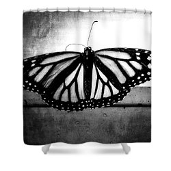 Black Butterfly Shower Curtain by Julia Wilcox