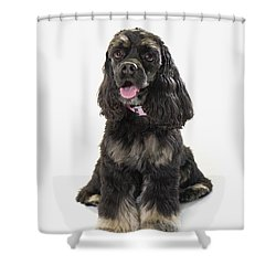 Black Cocker Spaniel With Golden Boots Shower Curtain by Corey Hochachka