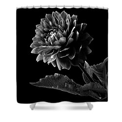 Black Dahlia In Black And White Shower Curtain