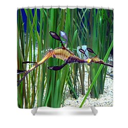 Shower Curtain featuring the photograph Black Dragon Seahorse by Carla Parris