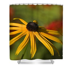 Black-eyed Susan 2 Shower Curtain by Sharon Talson
