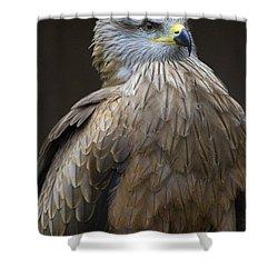 Black Kite 4 Shower Curtain by Heiko Koehrer-Wagner