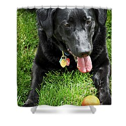 Black Lab Dog With A Ball Shower Curtain by Elena Elisseeva