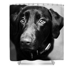 Black Labrador  Shower Curtain by Sumit Mehndiratta