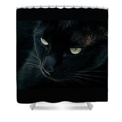 Black Panther Shower Curtain by Laura Melis