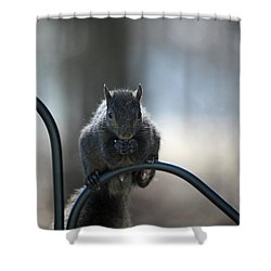 Black Squirrel  Shower Curtain by Karol Livote