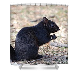 Black Squirrel Of Central Park Shower Curtain