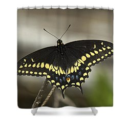 Black Swallowtail Din103 Shower Curtain