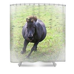 Black Zebra Shower Curtain by Karol Livote