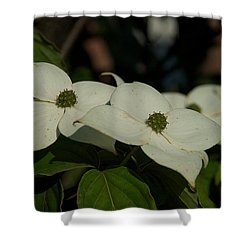 Shower Curtain featuring the photograph Blanket by Joseph Yarbrough