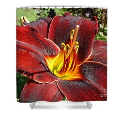 Bleeding Beauty Shower Curtain by Mark Robbins