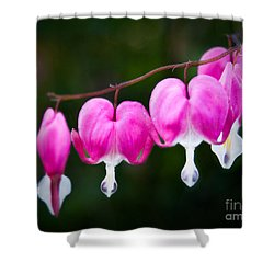 Shower Curtain featuring the photograph Bleeding Hearts 001 by Larry Carr