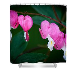 Shower Curtain featuring the photograph Bleeding Hearts 002 by Larry Carr