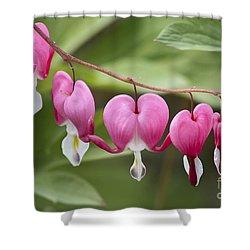 Bleeding Hearts Shower Curtain