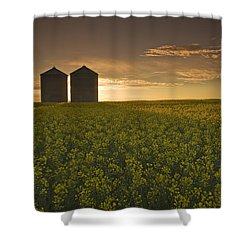 Bloom Stage Canola Field With Grain Shower Curtain by Dave Reede