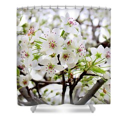 Shower Curtain featuring the photograph Blooming Ornamental Tree by Kay Novy