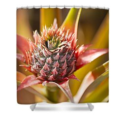 Blooming Pineapple II Shower Curtain by Ron Dahlquist