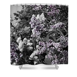 Shower Curtain featuring the photograph Blooms by Colleen Coccia