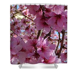 Shower Curtain featuring the photograph Blossoms by Lydia Holly