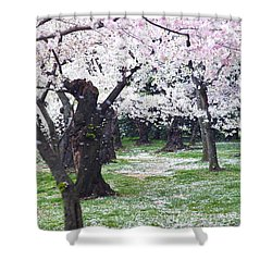 Blossoms Of The Heart Shower Curtain by Mitch Cat