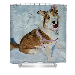 Blue - Siberian Husky Dog Painting Shower Curtain by Patricia Barmatz