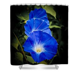 Blue Beauty Shower Curtain by Swift Family