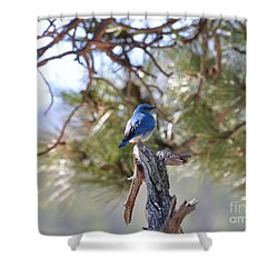 Blue Boy Shower Curtain by Dorrene BrownButterfield