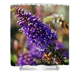 Shower Curtain featuring the photograph Blue Brush Bloom by Tikvah's Hope