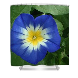Shower Curtain featuring the photograph Blue Burst by Bonfire Photography