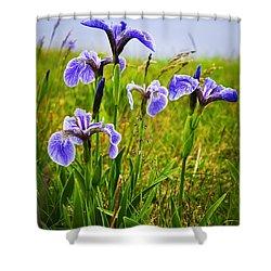 Blue Flag Iris Flowers Shower Curtain by Elena Elisseeva
