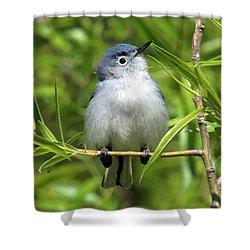 Blue-gray Gnatcatcher Dsb147 Shower Curtain by Gerry Gantt