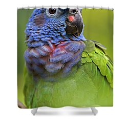 Blue-headed Parrot Pionus Menstruus Shower Curtain by Ingo Arndt