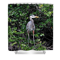 Shower Curtain featuring the photograph Blue Heron In Tree by Dan Friend
