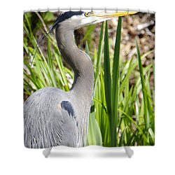 Shower Curtain featuring the photograph Blue Heron by Marilyn Wilson