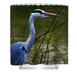 Blue Heron Vondelpark Amsterdam Shower Curtain