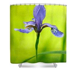 Blue Japanese Iris Shower Curtain by Lois Bryan