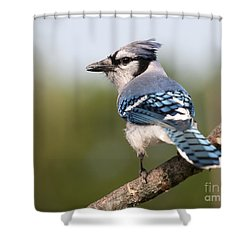 Shower Curtain featuring the photograph Blue Jay by Art Whitton
