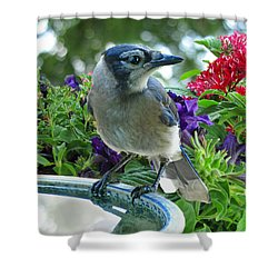 Shower Curtain featuring the photograph Blue Jay At Water by Debbie Portwood