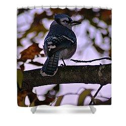 Blue Jay Shower Curtain by Joe Faherty