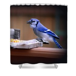 Shower Curtain featuring the photograph Blue Jay On Backyard Feeder by Kay Novy