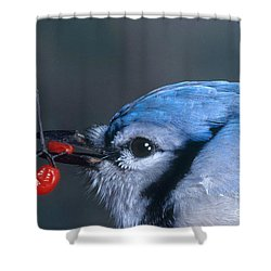 Blue Jay Shower Curtain