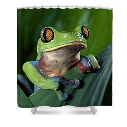 Blue-sided Leaf Frog Agalychnis Annae Shower Curtain by Michael & Patricia Fogden