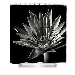 Shower Curtain featuring the photograph Blue Water Lily In Black And White by Endre Balogh