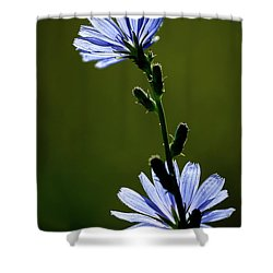 Blue Wildflower Shower Curtain by  Onyonet  Photo Studios
