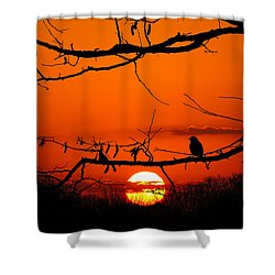 Bluebird Dawn Shower Curtain
