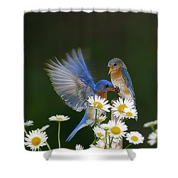 Shower Curtain featuring the photograph Bluebirds Picnicking In The Daisies by Randall Branham