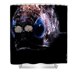 Blunt Face Lampfish Shower Curtain by Dante Fenolio
