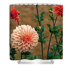 Shower Curtain featuring the photograph Bodaciously Orange by Jeanette C Landstrom