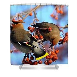 Bohemian Waxwings Shower Curtain